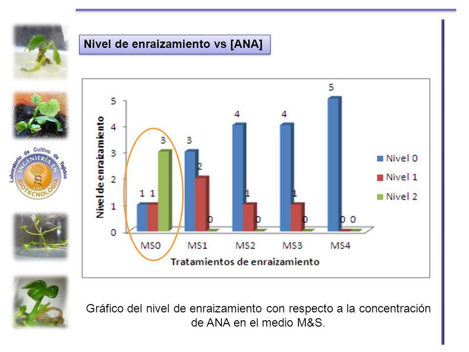 Nivel de enraizamiento vs [ANA] Gráfico del nivel de enraizamiento con respecto a la concentración de ANA en el medio M&S.