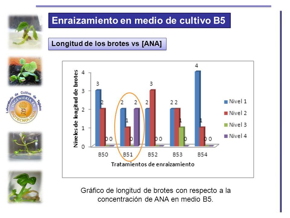 Enraizamiento en medio de cultivo B5 Longitud de los brotes vs [ANA] Gráfico de longitud de brotes con respecto a la concentración de ANA en medio B5.