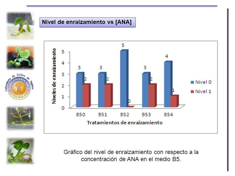 Nivel de enraizamiento vs [ANA] Gráfico del nivel de enraizamiento con respecto a la concentración de ANA en el medio B5.