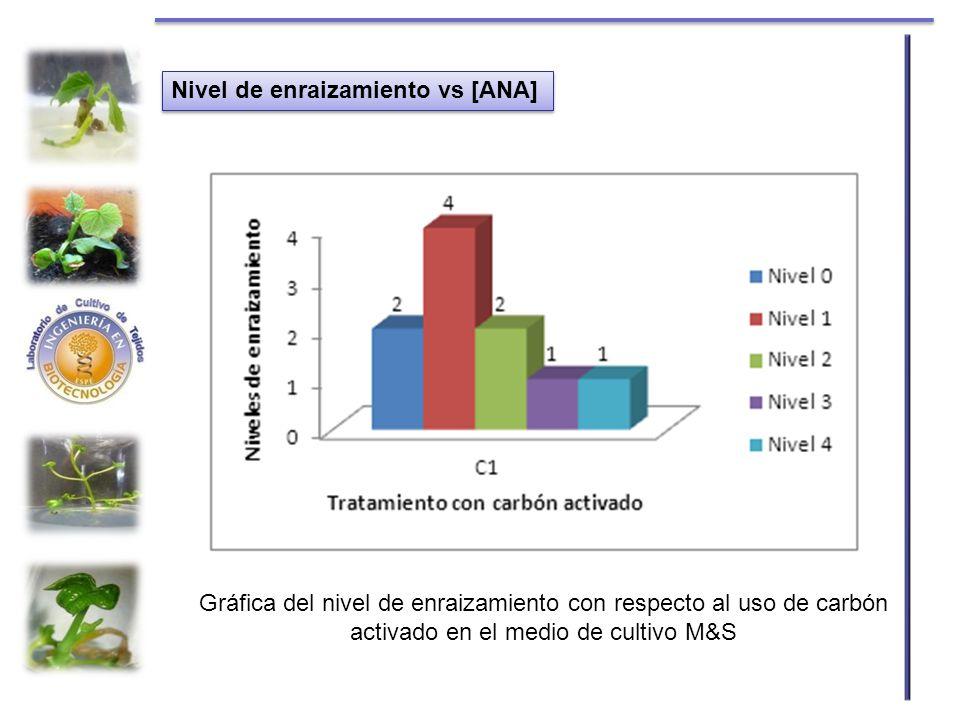 Nivel de enraizamiento vs [ANA] Gráfica del nivel de enraizamiento con respecto al uso de carbón activado en el medio de cultivo M&S