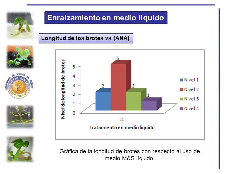Enraizamiento en medio líquido Longitud de los brotes vs [ANA] Gráfica de la longitud de brotes con respecto al uso de medio M&S líquido.