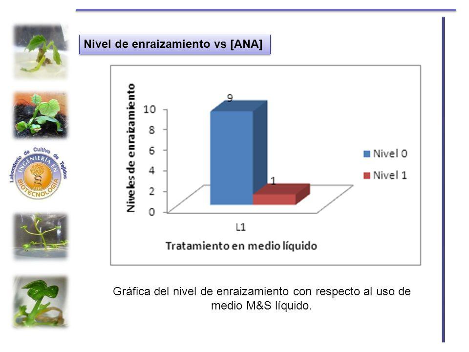 Gráfica del nivel de enraizamiento con respecto al uso de medio M&S líquido. Nivel de enraizamiento vs [ANA]