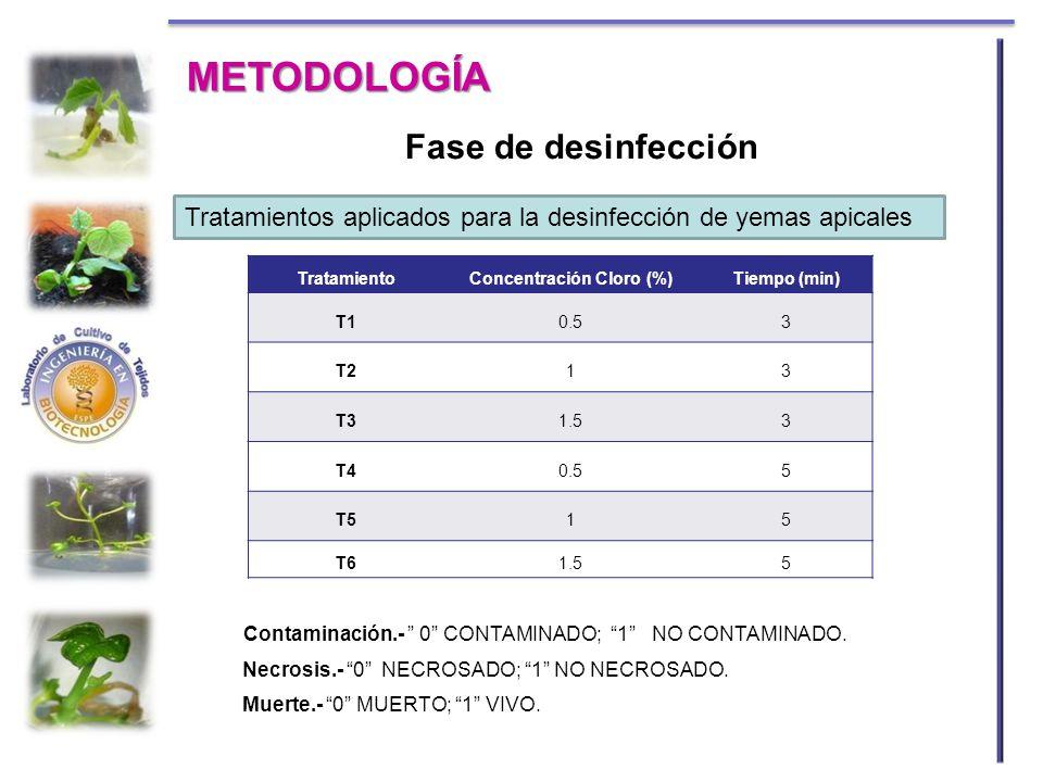METODOLOGÍA TratamientoConcentración Cloro (%)Tiempo (min) T10.53 T213 T31.53 T40.55 T515 T61.55 Contaminación.- 0 CONTAMINADO; 1 NO CONTAMINADO. Necr