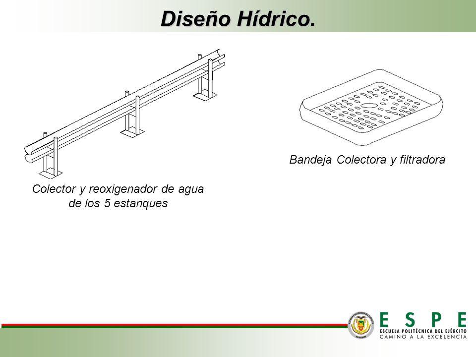 Diseño Hídrico. Bandeja Colectora y filtradora Colector y reoxigenador de agua de los 5 estanques Bandeja Colectora y filtradora