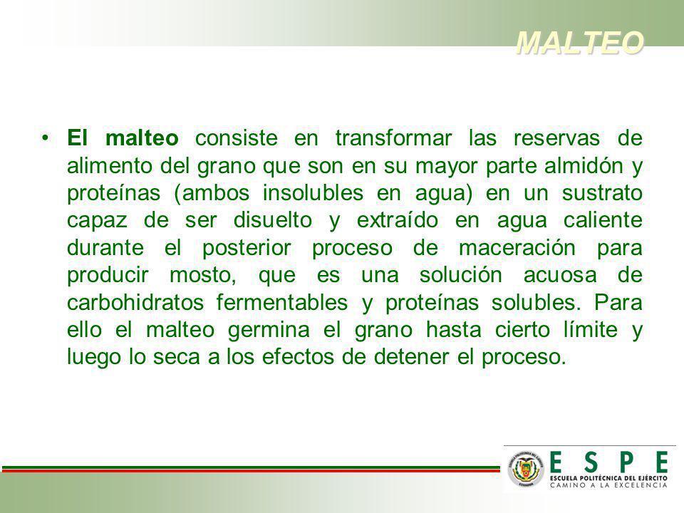 MALTEO El malteo consiste en transformar las reservas de alimento del grano que son en su mayor parte almidón y proteínas (ambos insolubles en agua) e