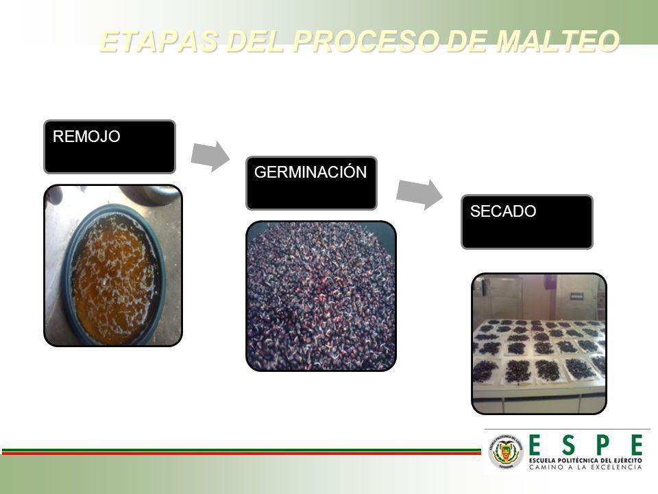 ETAPAS DEL PROCESO DE MALTEO REMOJO GERMINACIÓN SECADO