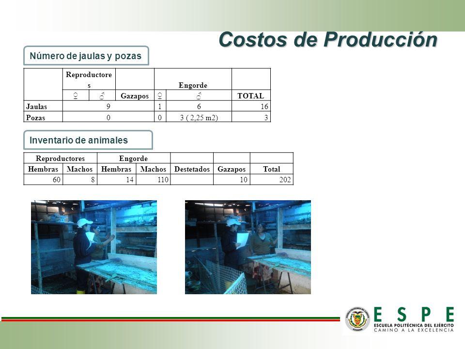 Costos de Producción Reproductore s Engorde GazaposTOTAL Jaulas91616 Pozas003 ( 2,25 m2)3 Número de jaulas y pozas ReproductoresEngorde HembrasMachosHembrasMachosDestetadosGazaposTotal 6081411010202 Inventario de animales