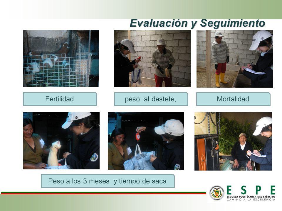 Evaluación y Seguimiento Fertilidad Peso a los 3 meses y tiempo de saca peso al destete,Mortalidad