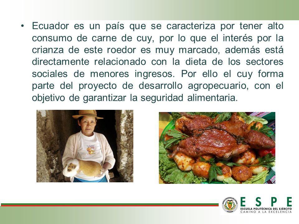 Ecuador es un país que se caracteriza por tener alto consumo de carne de cuy, por lo que el interés por la crianza de este roedor es muy marcado, además está directamente relacionado con la dieta de los sectores sociales de menores ingresos.