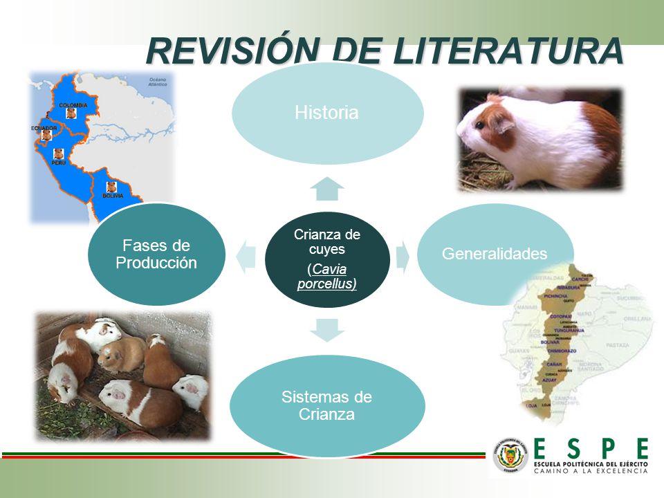 REVISIÓN DE LITERATURA Crianza de cuyes (Cavia porcellus) Historia Generalidades Sistemas de Crianza Fases de Producción