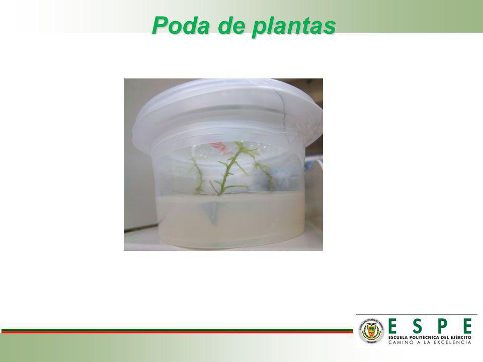 Poda de plantas