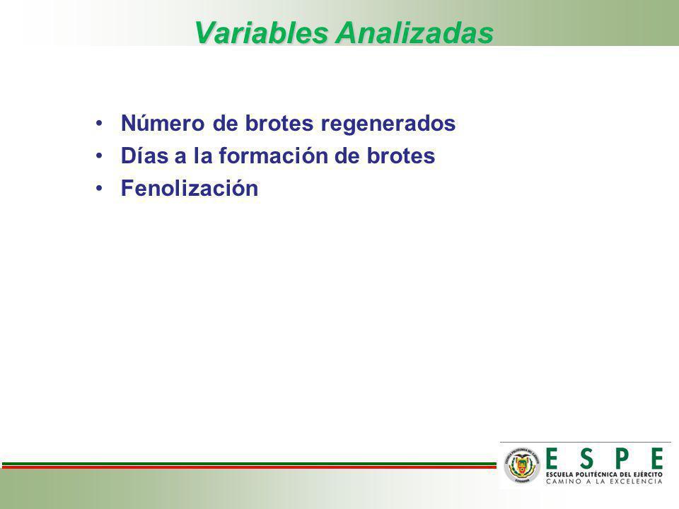 Variables Analizadas Número de brotes regenerados Días a la formación de brotes Fenolización