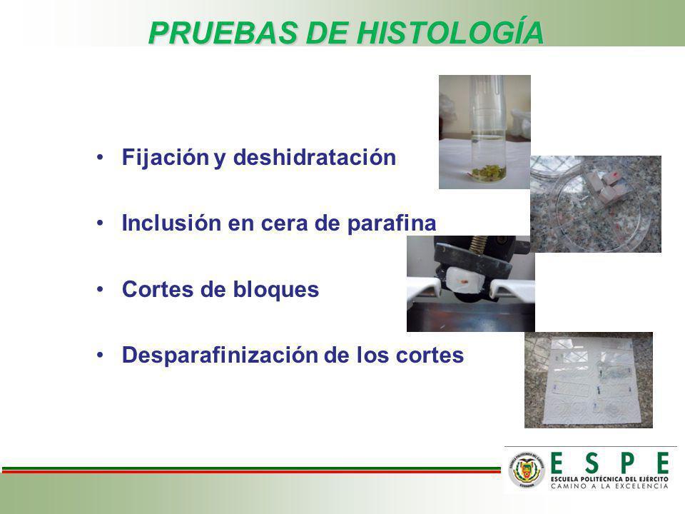 Fijación y deshidratación Inclusión en cera de parafina Cortes de bloques Desparafinización de los cortes