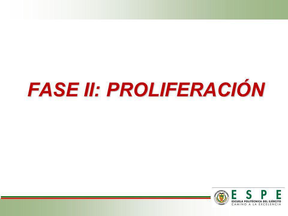 FASE II: PROLIFERACIÓN