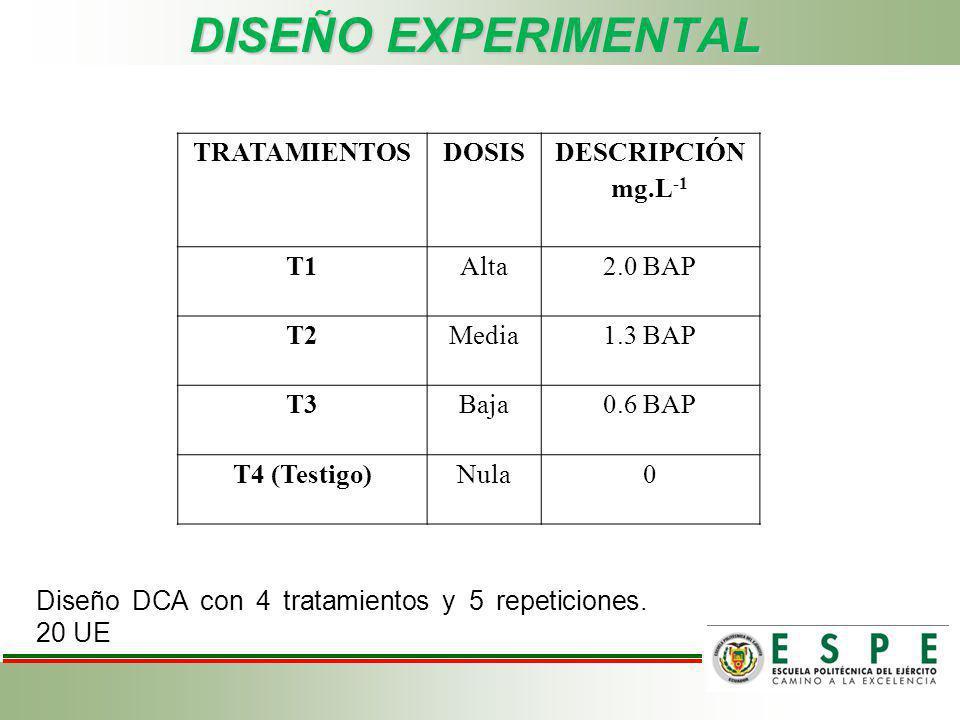 DISEÑO EXPERIMENTAL Diseño DCA con 4 tratamientos y 5 repeticiones. 20 UE TRATAMIENTOSDOSIS DESCRIPCIÓN mg.L -1 T1Alta2.0 BAP T2Media1.3 BAP T3Baja0.6