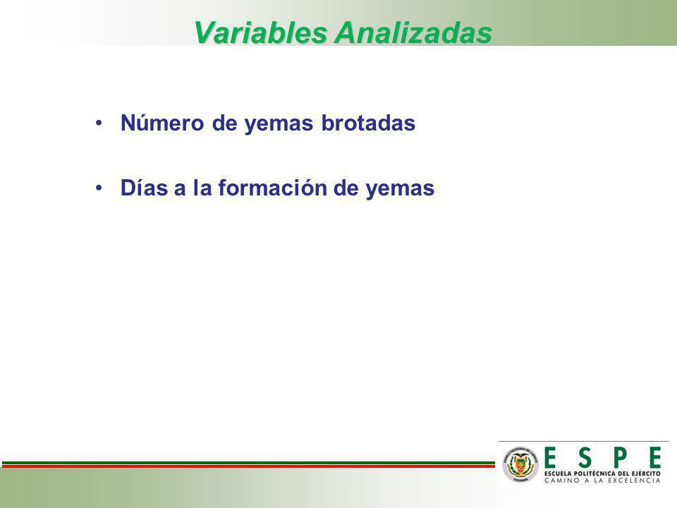 Variables Analizadas Número de yemas brotadas Días a la formación de yemas