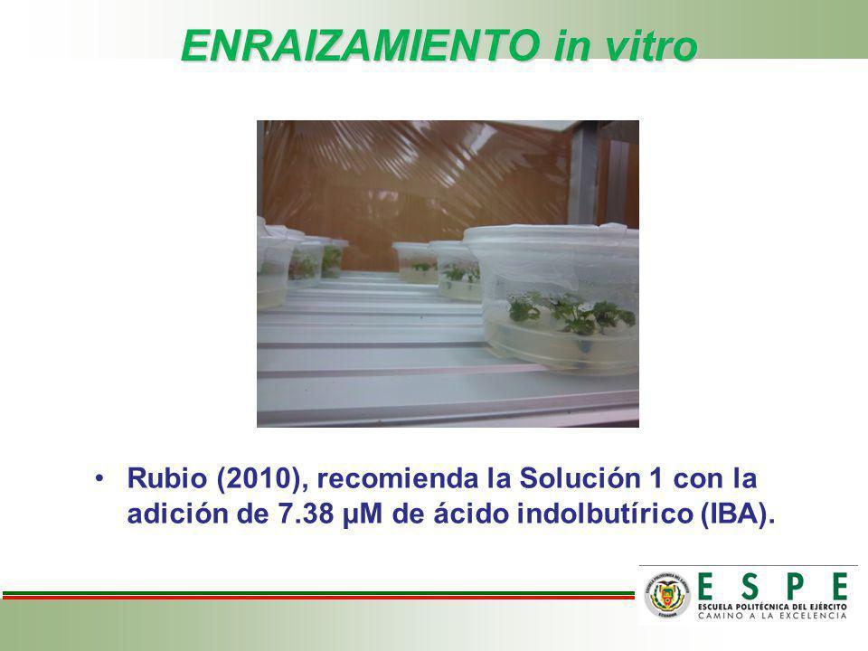 ENRAIZAMIENTO in vitro Rubio (2010), recomienda la Solución 1 con la adición de 7.38 μM de ácido indolbutírico (IBA).