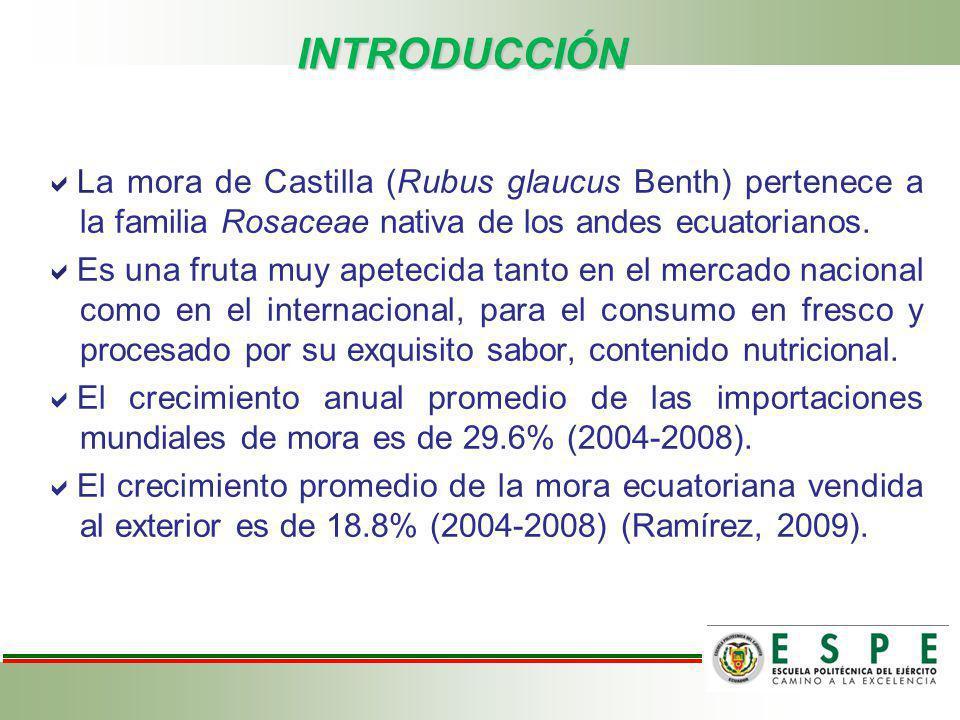 INTRODUCCIÓN La mora de Castilla (Rubus glaucus Benth) pertenece a la familia Rosaceae nativa de los andes ecuatorianos. Es una fruta muy apetecida ta