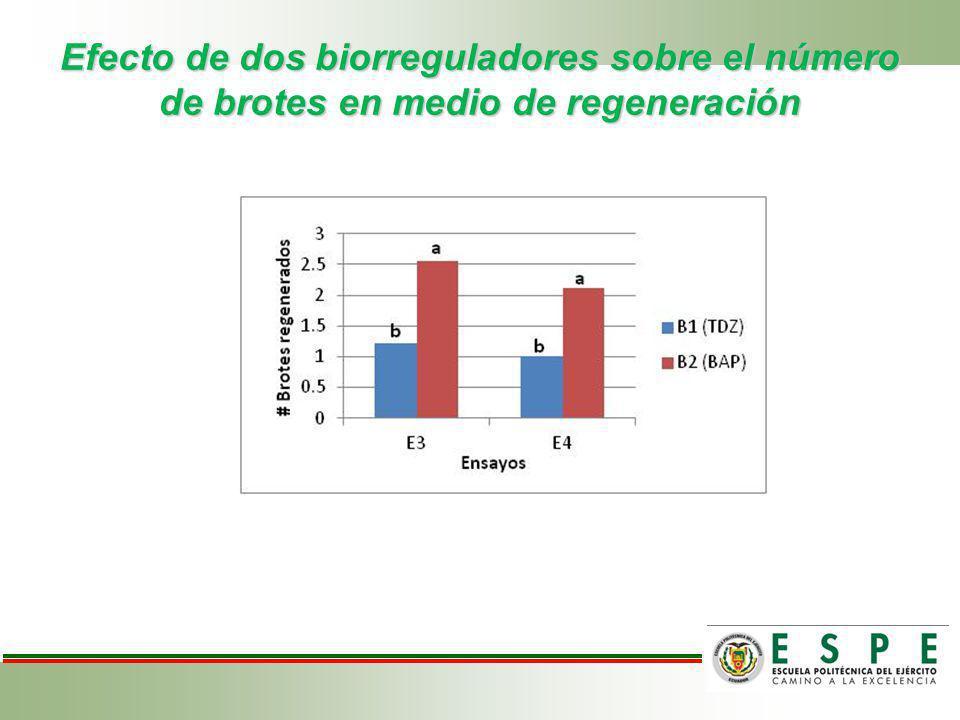 Efecto de dos biorreguladores sobre el número de brotes en medio de regeneración