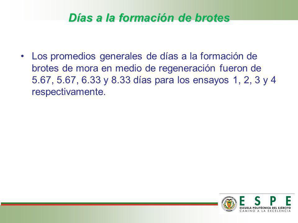Días a la formación de brotes Los promedios generales de días a la formación de brotes de mora en medio de regeneración fueron de 5.67, 5.67, 6.33 y 8