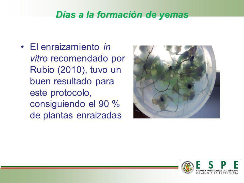 Días a la formación de yemas El enraizamiento in vitro recomendado por Rubio (2010), tuvo un buen resultado para este protocolo, consiguiendo el 90 %
