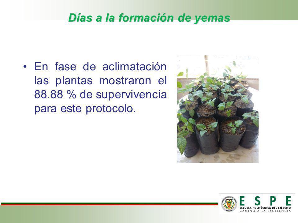 Días a la formación de yemas En fase de aclimatación las plantas mostraron el 88.88 % de supervivencia para este protocolo.