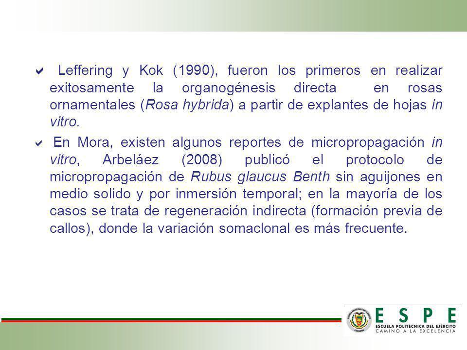 Leffering y Kok (1990), fueron los primeros en realizar exitosamente la organogénesis directa en rosas ornamentales (Rosa hybrida) a partir de explant