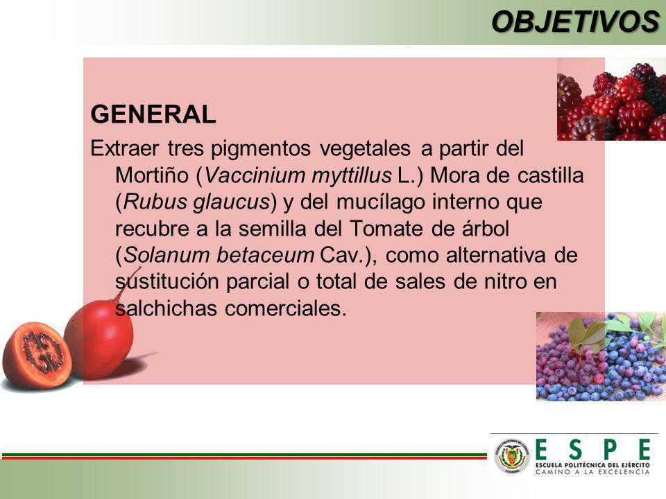 OBJETIVOS GENERAL Extraer tres pigmentos vegetales a partir del Mortiño (Vaccinium myttillus L.) Mora de castilla (Rubus glaucus) y del mucílago inter