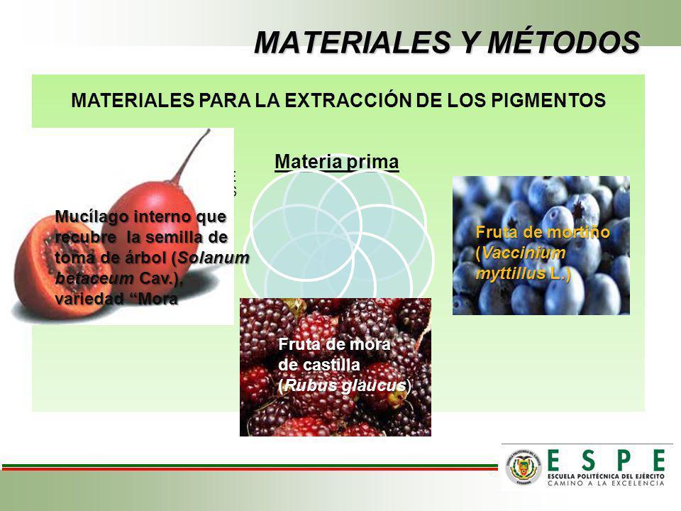 MATERIALES Y MÉTODOS Materia prima MATERIALES PARA LA EXTRACCIÓN DE LOS PIGMENTOS Fruta de mora de castilla (Rubus glaucus) Fruta de mortiño (Vacciniu