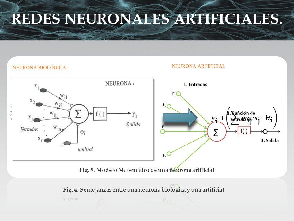 Fig. 4. Semejanzas entre una neurona biológica y una artificial Fig. 5. Modelo Matemático de una neurona artificial