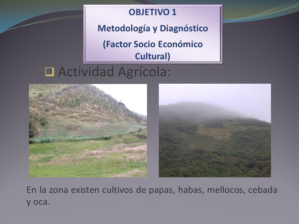 Actividad Agrícola: OBJETIVO 1 Metodología y Diagnóstico (Factor Socio Económico Cultural) OBJETIVO 1 Metodología y Diagnóstico (Factor Socio Económic