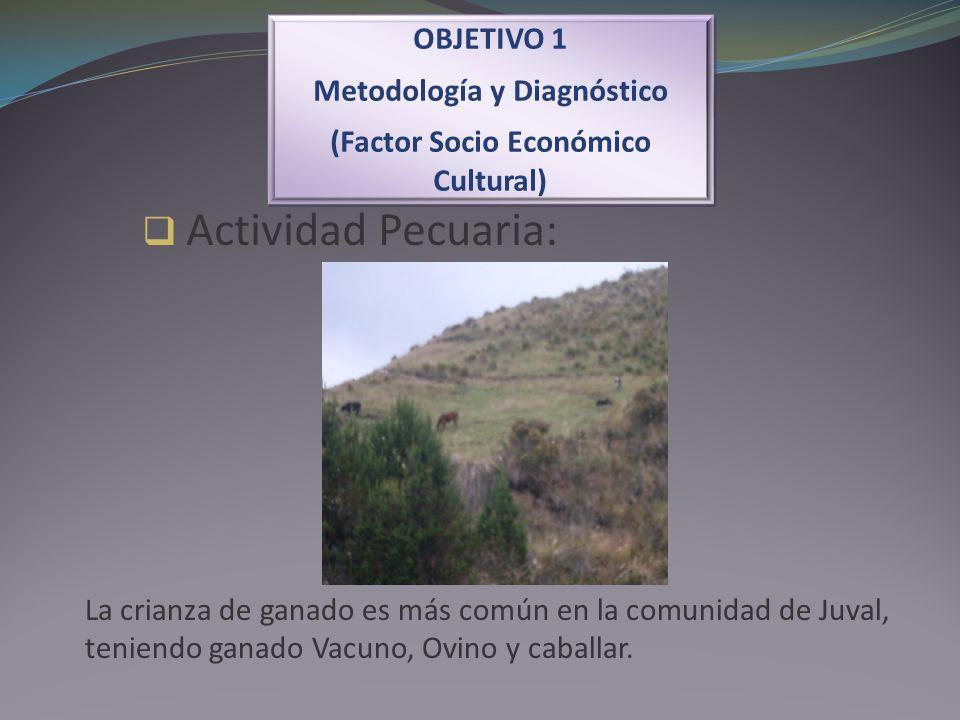 Actividad Pecuaria: OBJETIVO 1 Metodología y Diagnóstico (Factor Socio Económico Cultural) OBJETIVO 1 Metodología y Diagnóstico (Factor Socio Económic