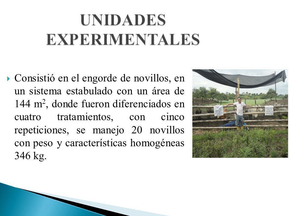 UNIDADES EXPERIMENTALES Consistió en el engorde de novillos, en un sistema estabulado con un área de 144 m 2, donde fueron diferenciados en cuatro tra