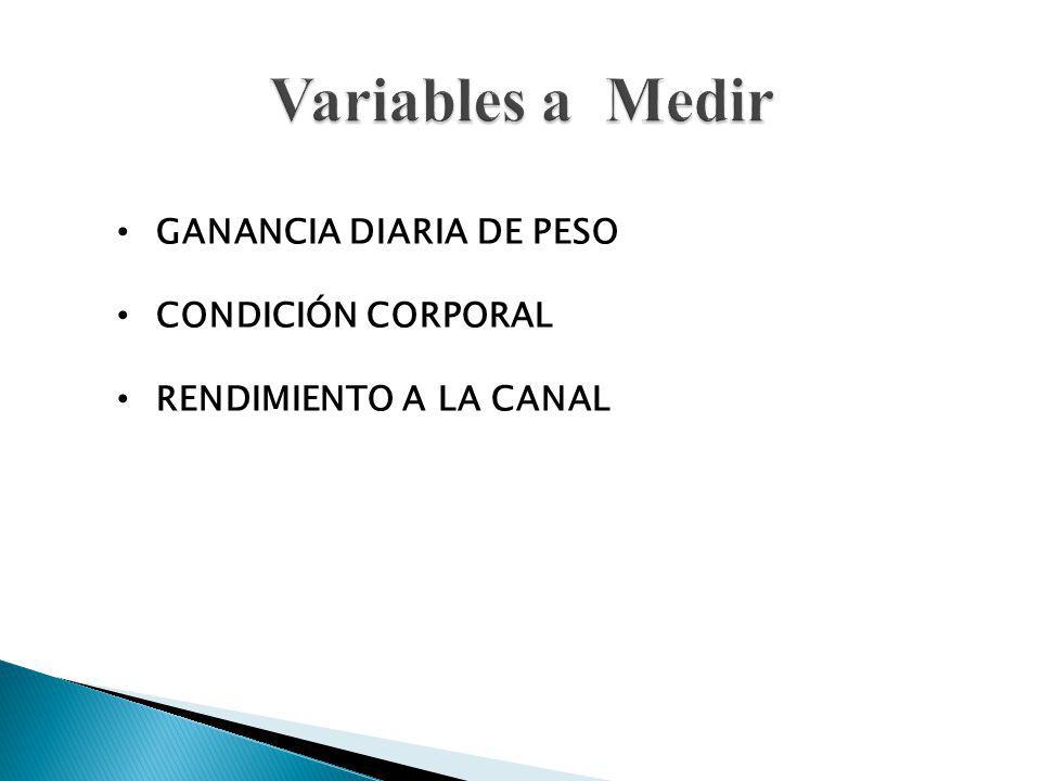 GANANCIA DIARIA DE PESO CONDICIÓN CORPORAL RENDIMIENTO A LA CANAL
