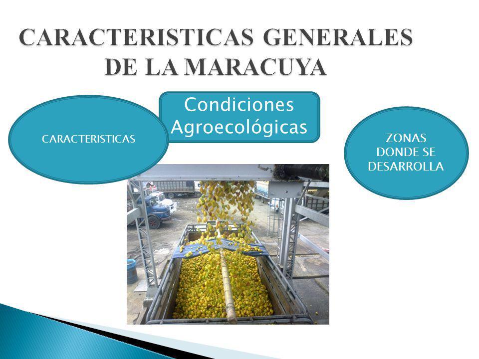 CARACTERISTICAS GENERALES DE LA MARACUYA Condiciones Agroecológicas CARACTERISTICAS ZONAS DONDE SE DESARROLLA