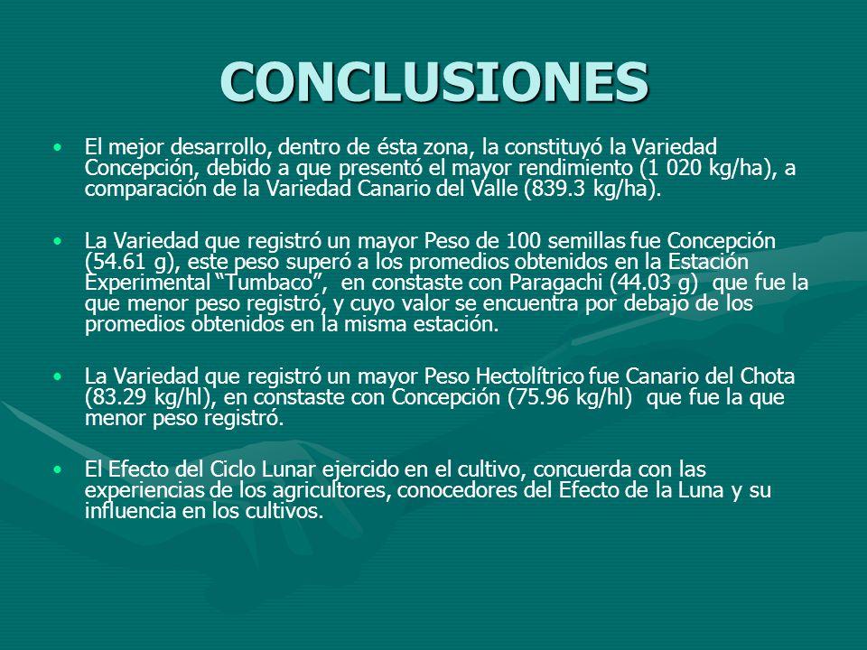 El mejor desarrollo, dentro de ésta zona, la constituyó la Variedad Concepción, debido a que presentó el mayor rendimiento (1 020 kg/ha), a comparació