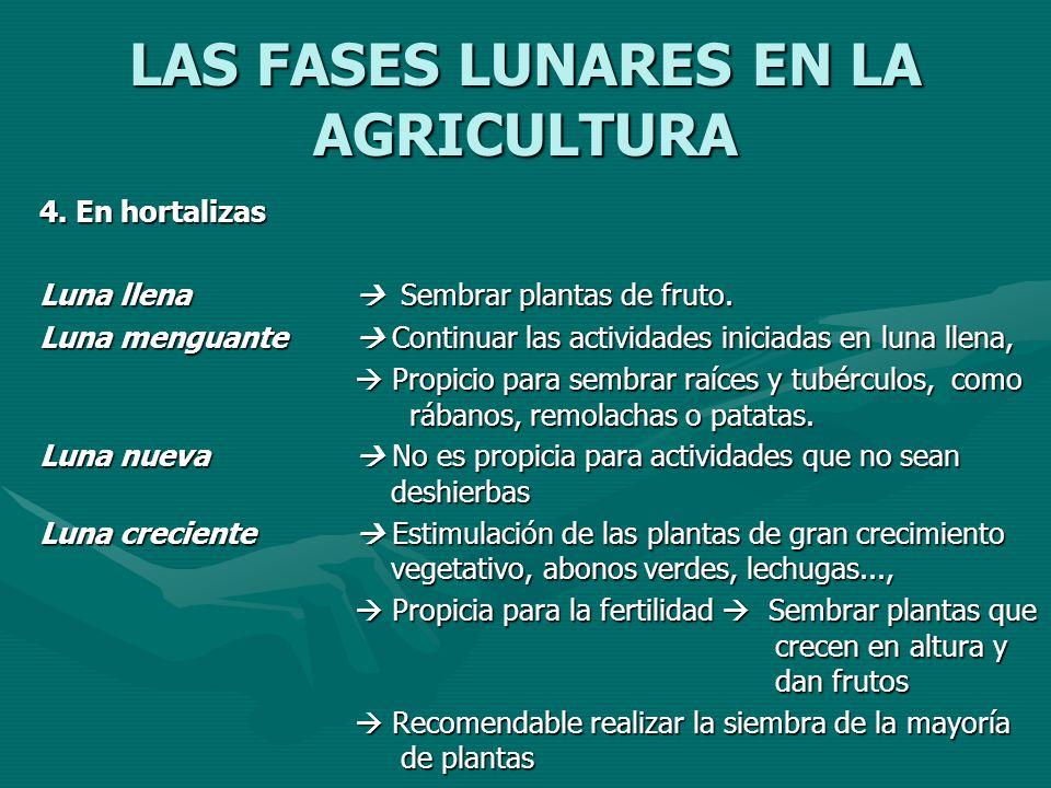 LAS FASES LUNARES EN LA AGRICULTURA 4. En hortalizas Luna llena Sembrar plantas de fruto. Luna menguante Continuar las actividades iniciadas en luna l