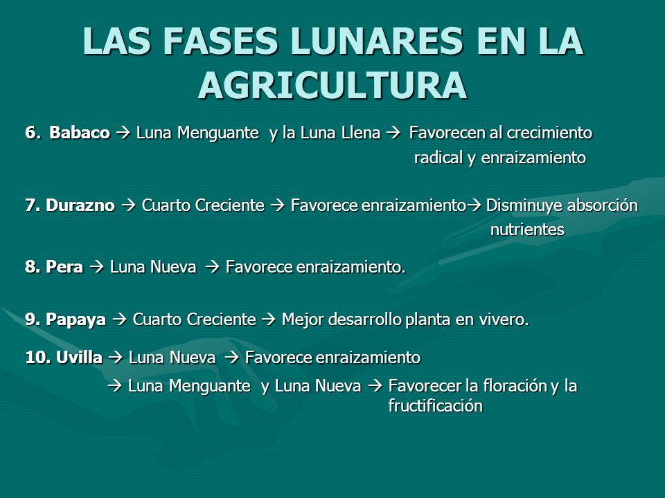 LAS FASES LUNARES EN LA AGRICULTURA 6. Babaco Luna Menguante y la Luna Llena Favorecen al crecimiento radical y enraizamiento 7. Durazno Cuarto Crecie