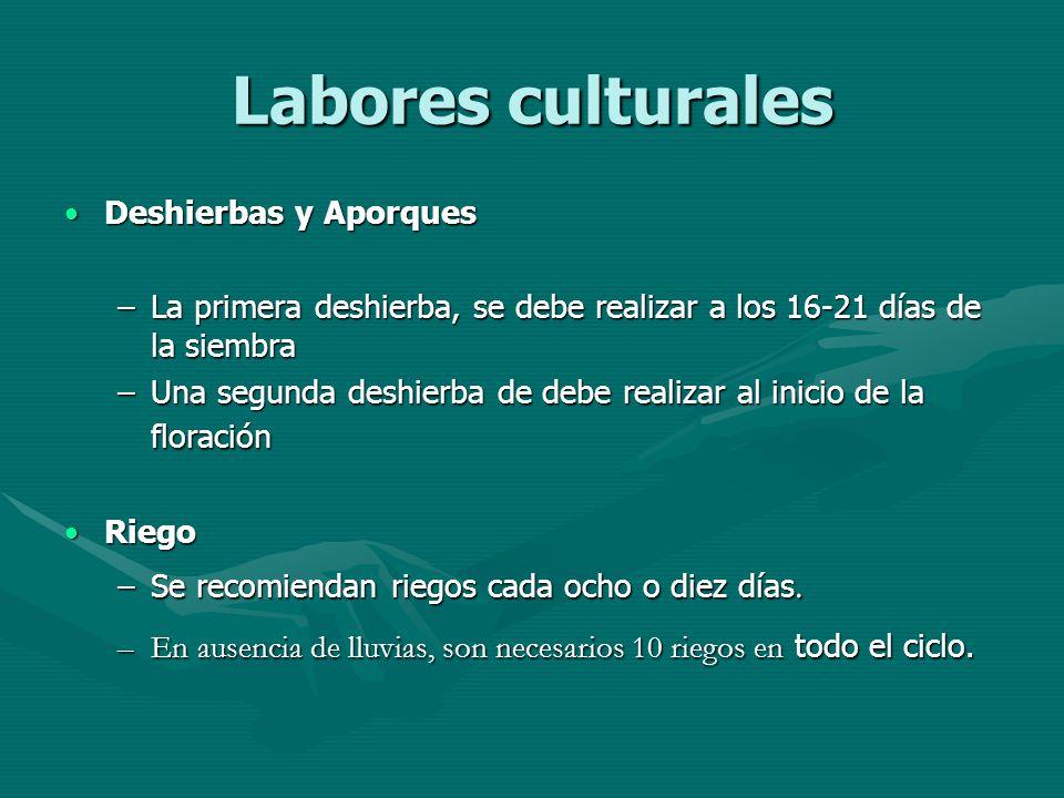 Labores culturales Deshierbas y AporquesDeshierbas y Aporques –La primera deshierba, se debe realizar a los 16-21 días de la siembra –Una segunda desh