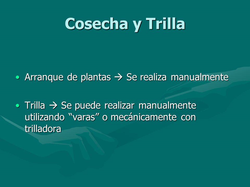 Cosecha y Trilla Arranque de plantas Se realiza manualmenteArranque de plantas Se realiza manualmente Trilla Se puede realizar manualmente utilizando
