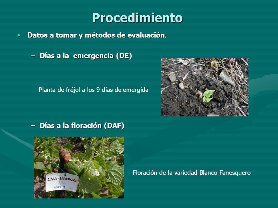 Procedimiento Datos a tomar y métodos de evaluación :Datos a tomar y métodos de evaluación : –Días a la emergencia (DE) –Días a la floración (DAF) Pla