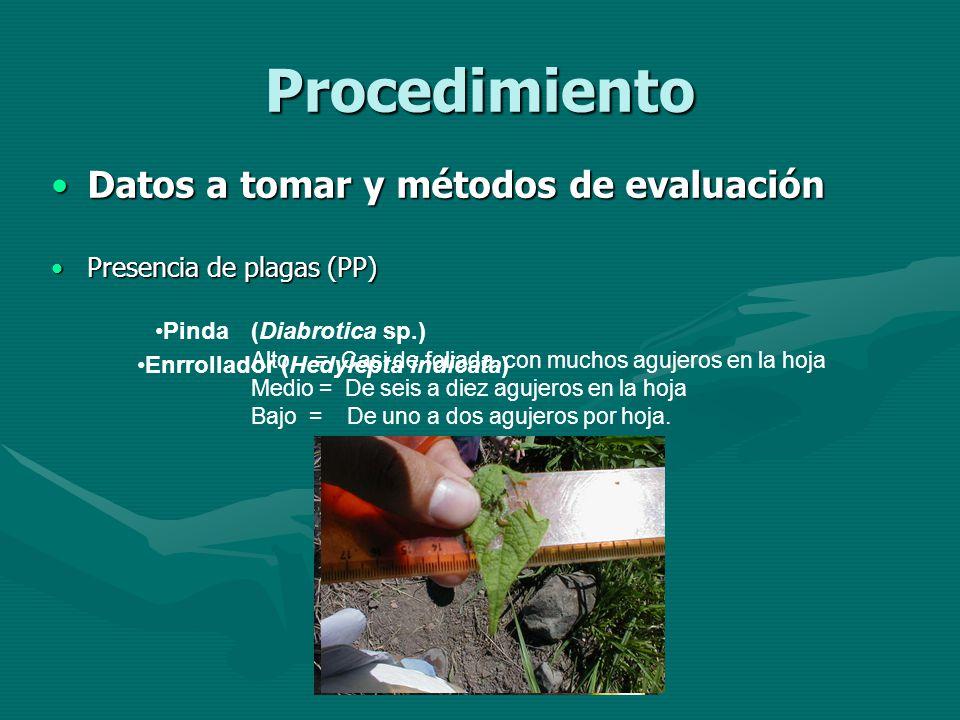 Procedimiento Datos a tomar y métodos de evaluaciónDatos a tomar y métodos de evaluación Presencia de plagas (PP)Presencia de plagas (PP) Pinda (Diabr