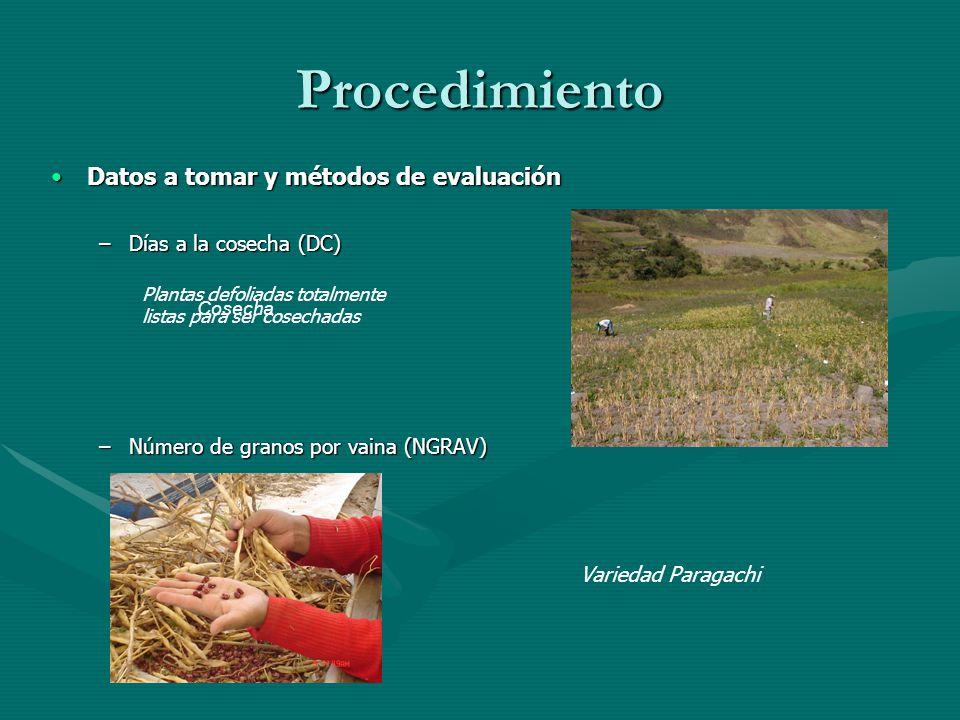 Procedimiento Datos a tomar y métodos de evaluaciónDatos a tomar y métodos de evaluación –Días a la cosecha (DC) –Número de granos por vaina (NGRAV) P