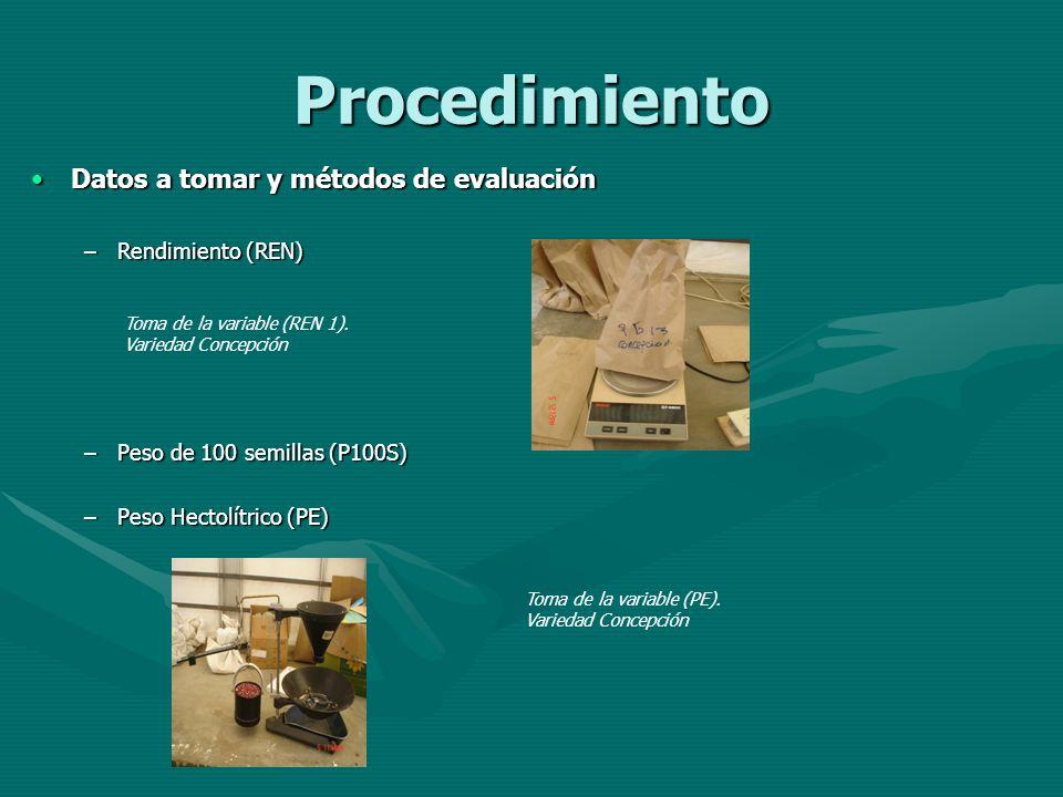 Procedimiento Datos a tomar y métodos de evaluaciónDatos a tomar y métodos de evaluación –Rendimiento (REN) –Peso de 100 semillas (P100S) –Peso Hectol