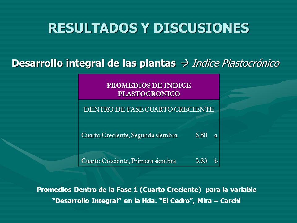RESULTADOS Y DISCUSIONES Desarrollo integral de las plantas Indice Plastocrónico Desarrollo integral de las plantas Indice Plastocrónico PROMEDIOS DE