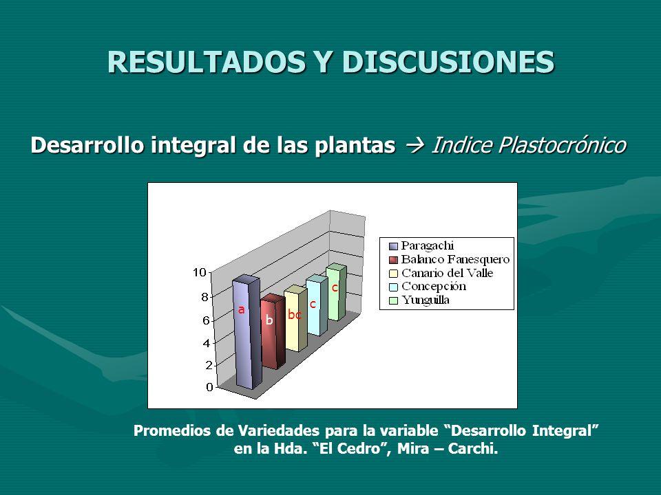 RESULTADOS Y DISCUSIONES Desarrollo integral de las plantas Indice Plastocrónico a b bc c c Promedios de Variedades para la variable Desarrollo Integr
