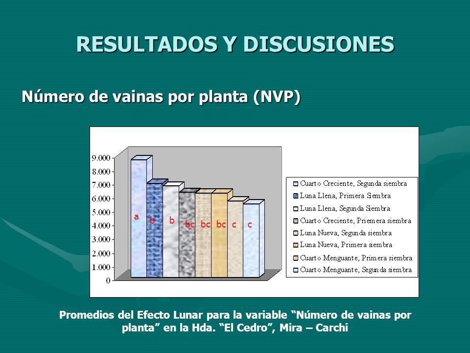 RESULTADOS Y DISCUSIONES Número de vainas por planta (NVP) a bb bc cc Promedios del Efecto Lunar para la variable Número de vainas por planta en la Hd