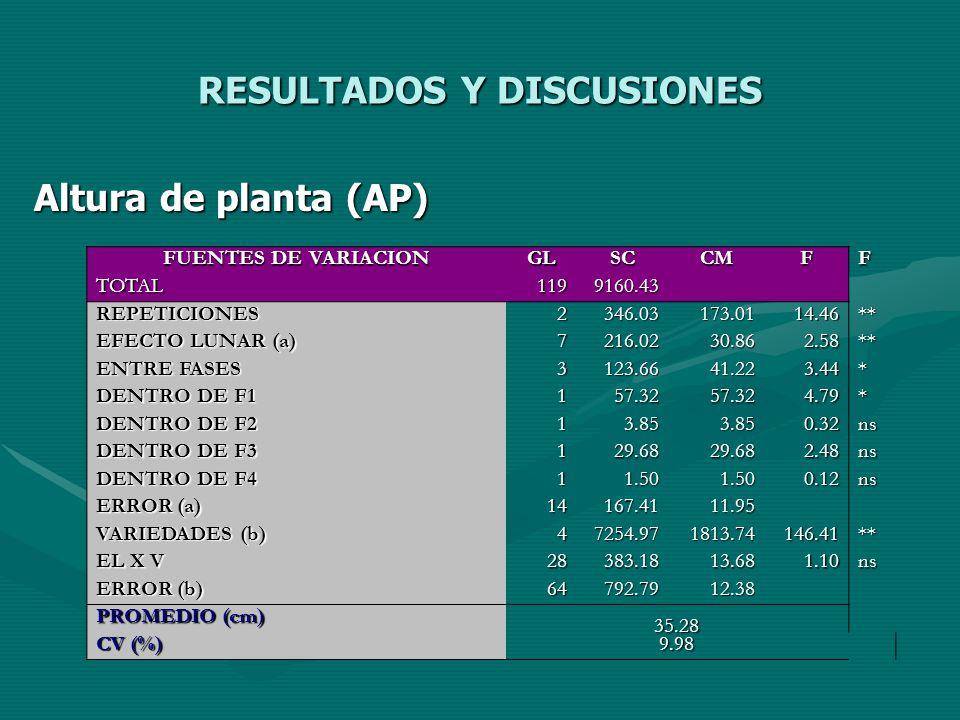 RESULTADOS Y DISCUSIONES Altura de planta (AP) FUENTES DE VARIACION GLSCCMFF TOTAL1199160.43 REPETICIONES2346.03173.0114.46** EFECTO LUNAR (a) 7216.02