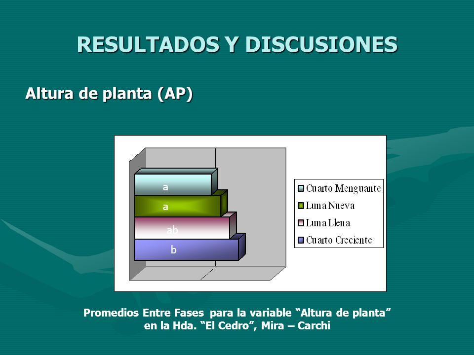 RESULTADOS Y DISCUSIONES Altura de planta (AP) a a abab b Promedios Entre Fases para la variable Altura de planta en la Hda. El Cedro, Mira – Carchi
