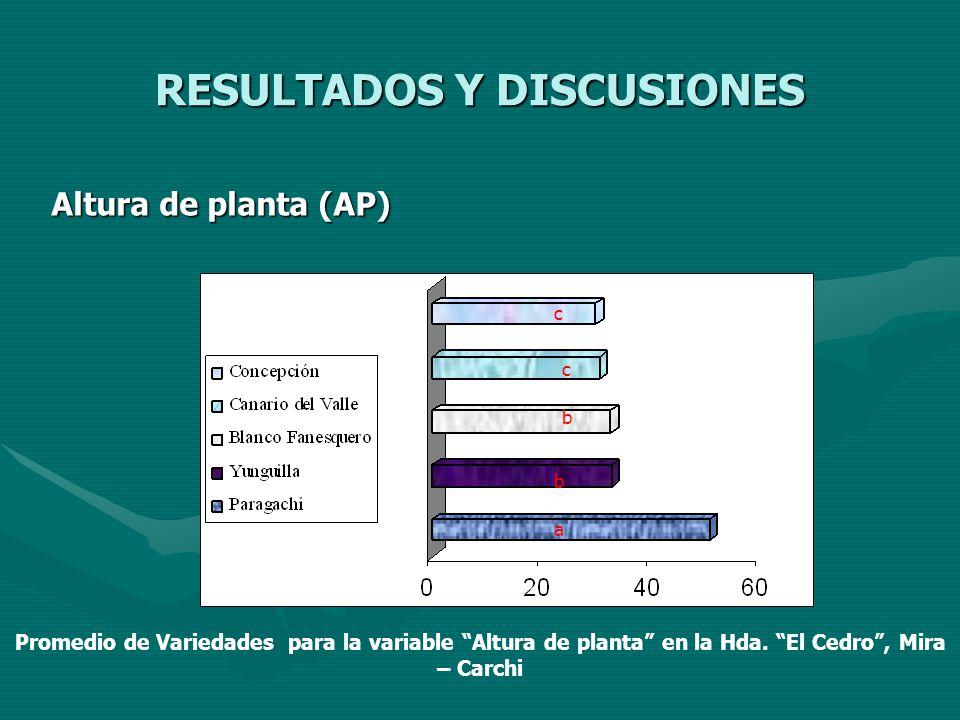 RESULTADOS Y DISCUSIONES Altura de planta (AP) a b b c c Promedio de Variedades para la variable Altura de planta en la Hda. El Cedro, Mira – Carchi